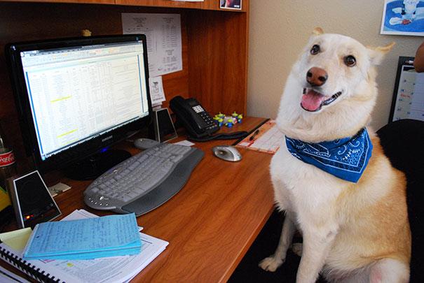 Gente que se lleva a su perro al trabajo (6)