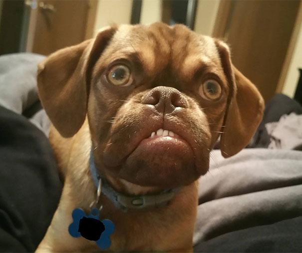 Grumpy Dog el perro que parece estar siempre enfadado (2)