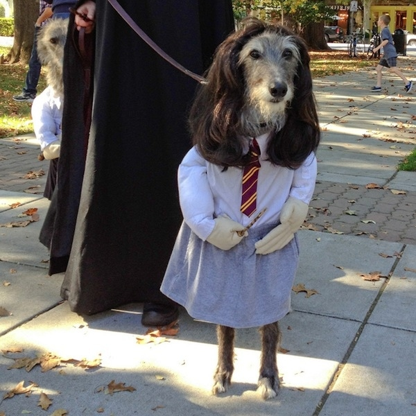 Los mejores disfraces para perros