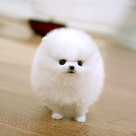 Los Perros Más Pequeños Y Bonitos Del Mundo 11 Perros Amigos