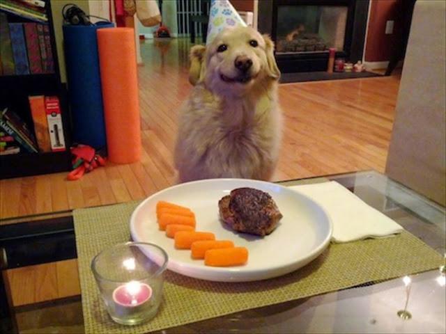 Los perros mas felices del mundo (10)