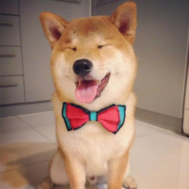 Los perros mas felices del mundo (11)