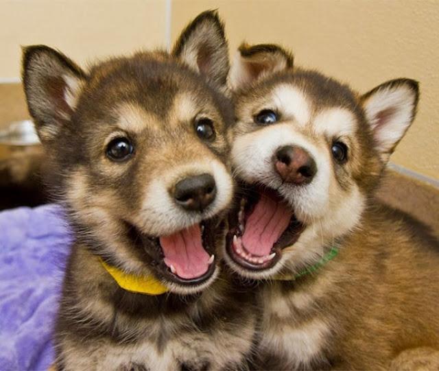 Los perros mas felices del mundo (16)