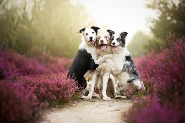 Los perros mas felices del mundo (20)