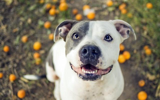 Los perros mas felices del mundo (8)