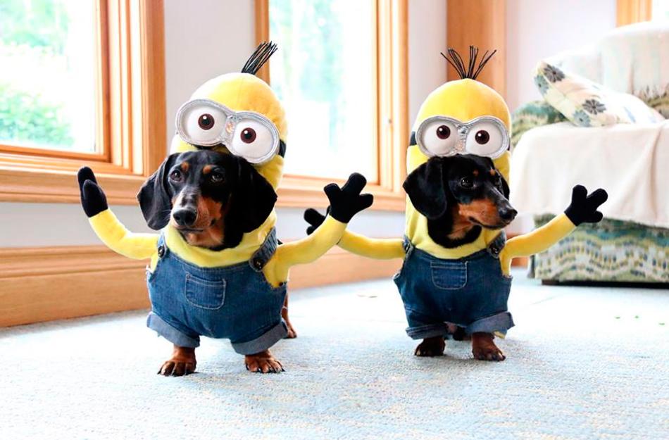 Perros disfrazados de Minions