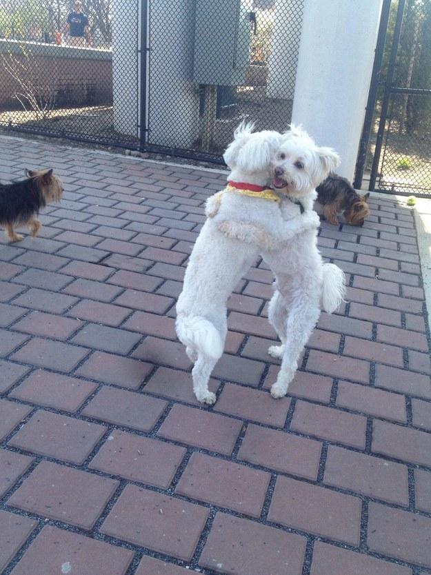 Perros Haciendo Cosas De Personas Perros Amigos