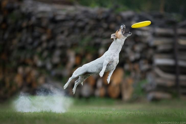 Perros pueden volar (14)