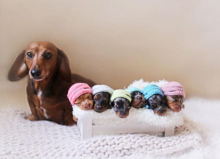 Preciosa familia perruna (2)
