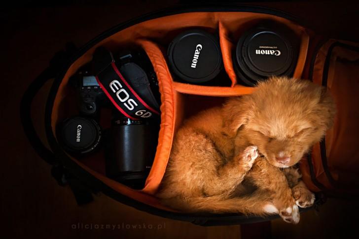 Preciosas fotografias de perros (1)