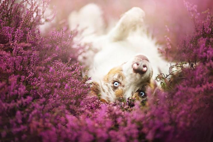 Preciosas fotografias de perros (10)