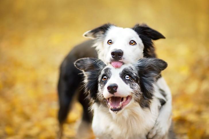 Preciosas fotografias de perros (11)