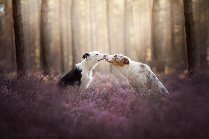 Preciosas fotografias de perros (2)