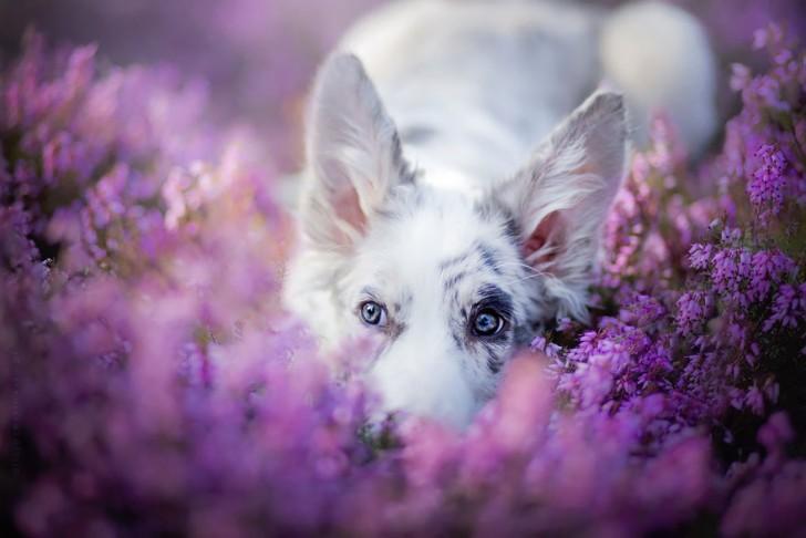 Preciosas fotografias de perros (3)