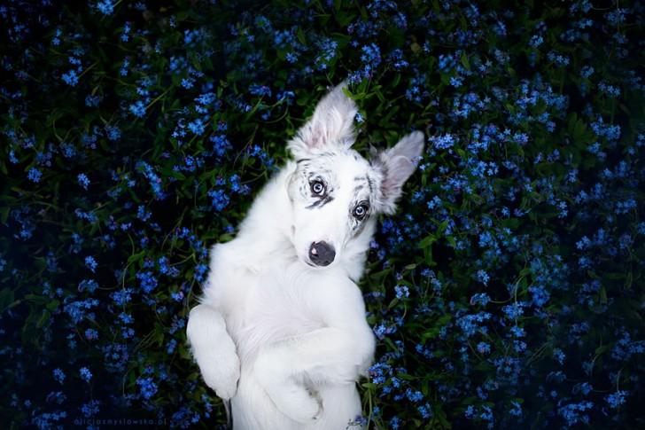 Preciosas fotografias de perros (5)
