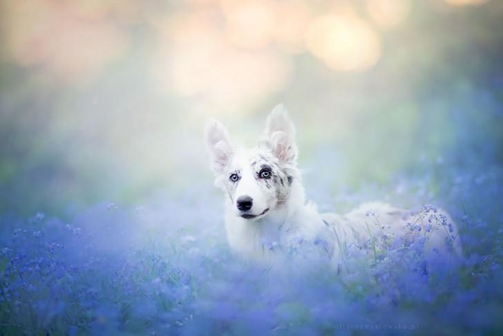 Preciosas fotografias de perros (6)