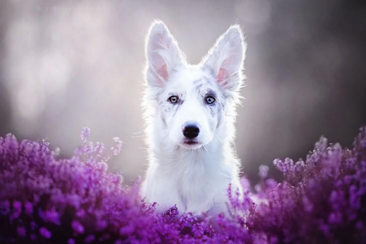 Preciosas fotografias de perros (7)