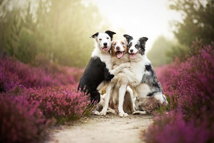 Preciosas fotografias de perros (8)