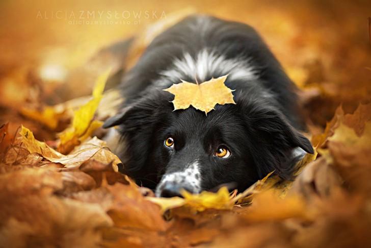 Preciosas fotografias de perros (9)