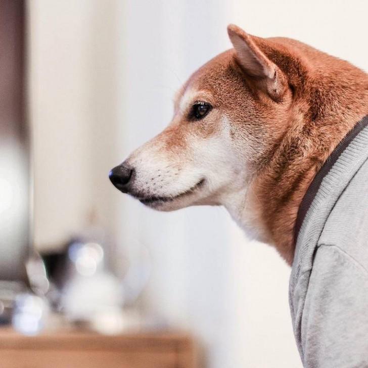 voici-bodhi-el-perro-con-mas-estilo-de-la-red-12