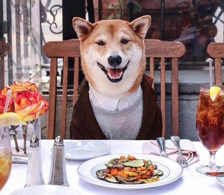 Voici Bodhi, el perro con más estilo de la red