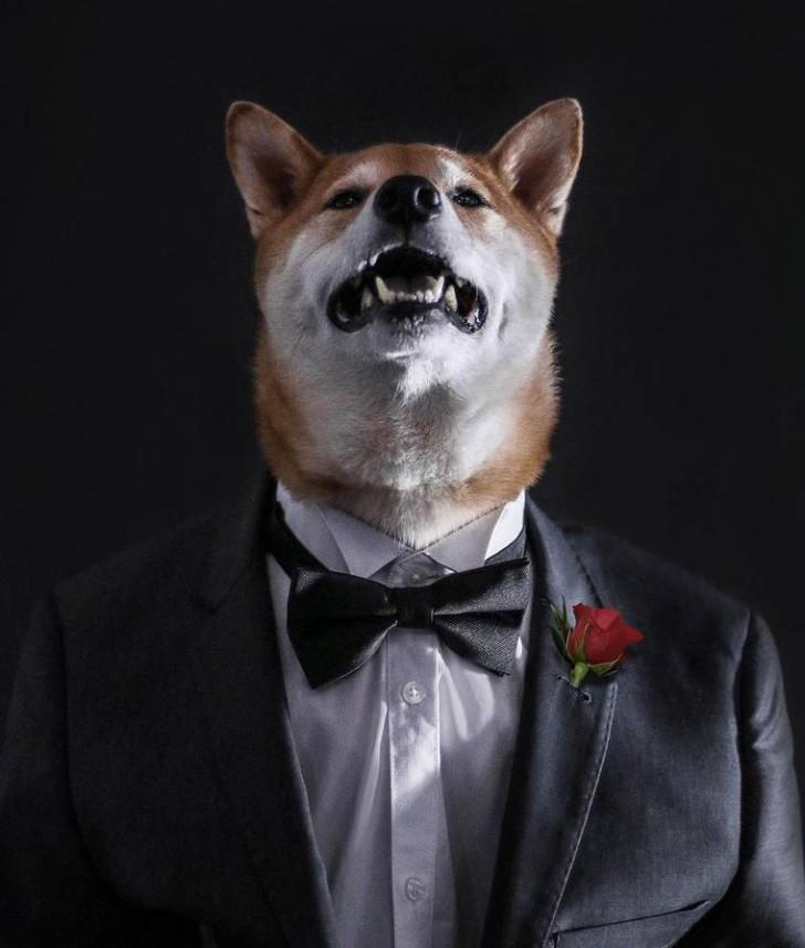 voici-bodhi-el-perro-con-mas-estilo-de-la-red-17