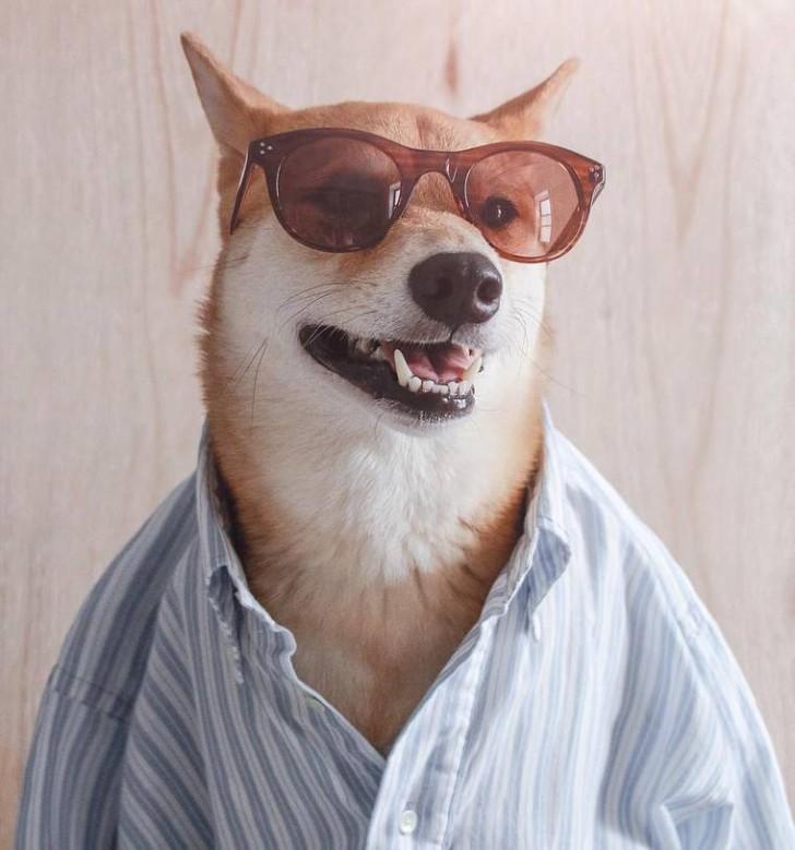 voici-bodhi-el-perro-con-mas-estilo-de-la-red-18