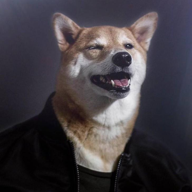 voici-bodhi-el-perro-con-mas-estilo-de-la-red-19