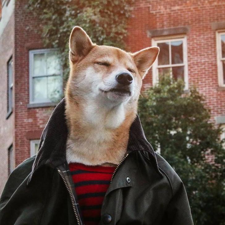 voici-bodhi-el-perro-con-mas-estilo-de-la-red-2