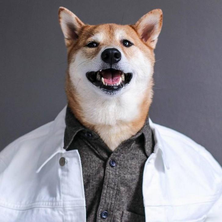voici-bodhi-el-perro-con-mas-estilo-de-la-red-20