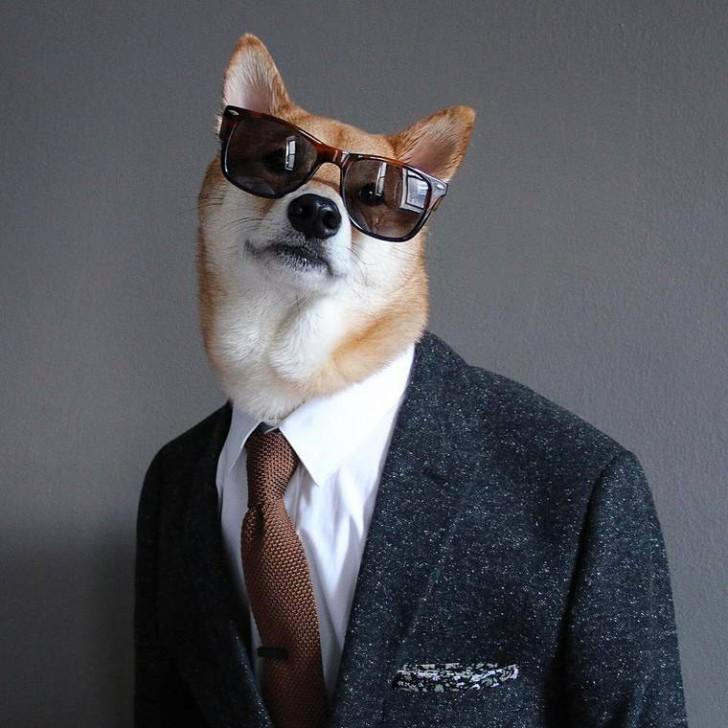 voici-bodhi-el-perro-con-mas-estilo-de-la-red-21