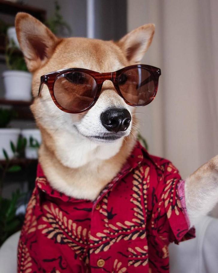 voici-bodhi-el-perro-con-mas-estilo-de-la-red-22