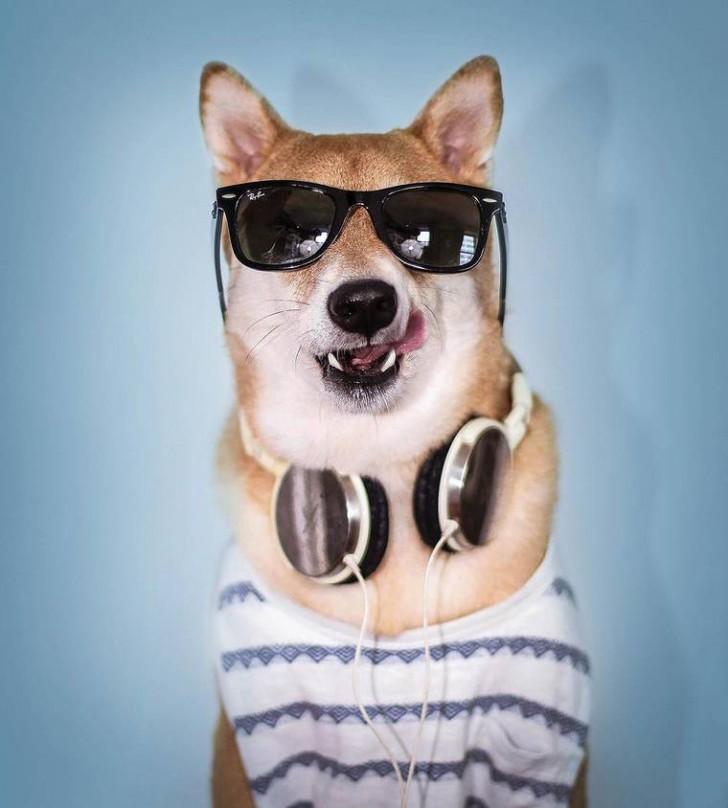 voici-bodhi-el-perro-con-mas-estilo-de-la-red-3