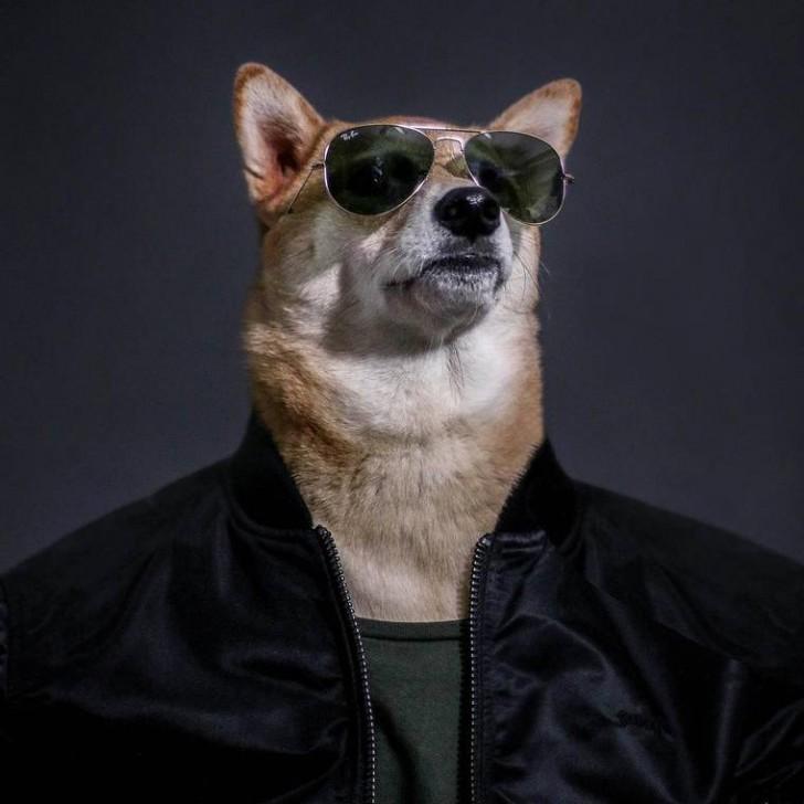voici-bodhi-el-perro-con-mas-estilo-de-la-red-5