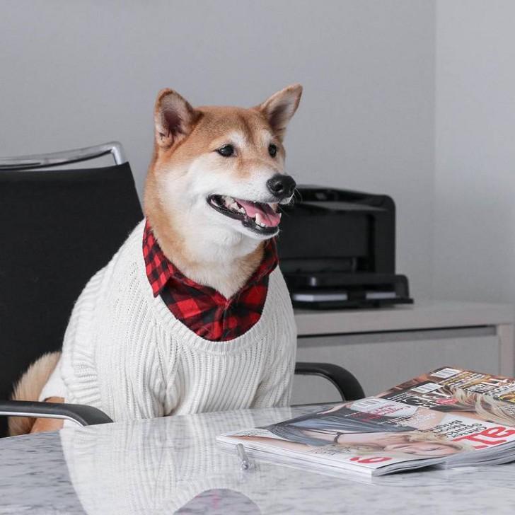 voici-bodhi-el-perro-con-mas-estilo-de-la-red-7