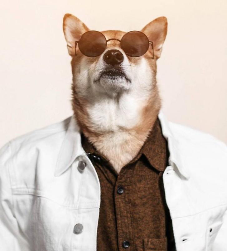 voici-bodhi-el-perro-con-mas-estilo-de-la-red-8