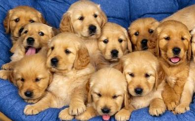 Imagenes de perros hermosos